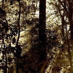 Qu'est-ce qu'un groupement forestier ?